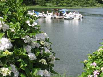 志高湖とあじさい