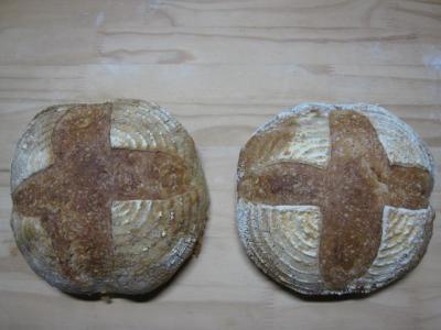 右イーストカンパ・左酵母カンパ