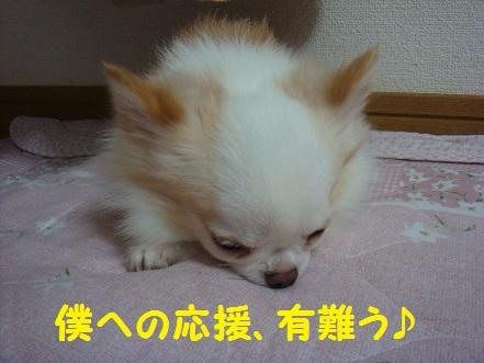 DSC04897.jpg