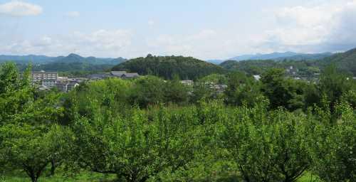 20110621honguuyama.jpg