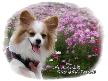 001-20111021.jpg