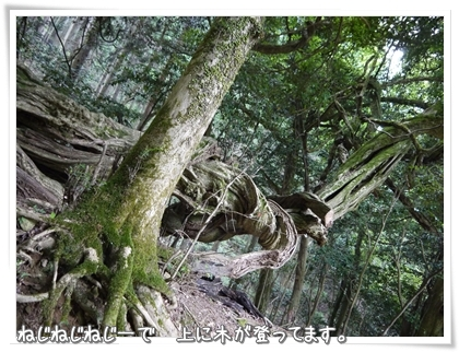 036-20120802.jpg