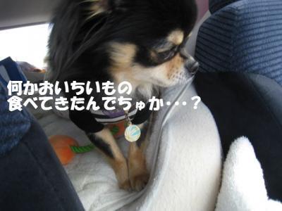 IMG_9736_20100824141245.jpg