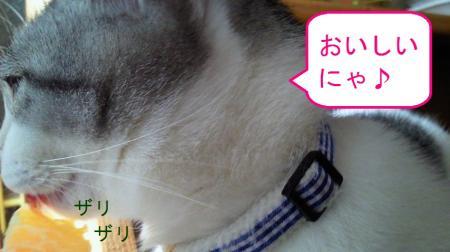 003_convert_20110228140252.jpg