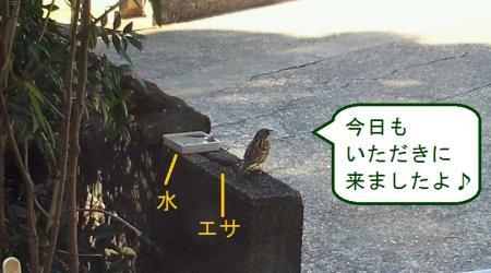 005_convert_20110301133601.jpg