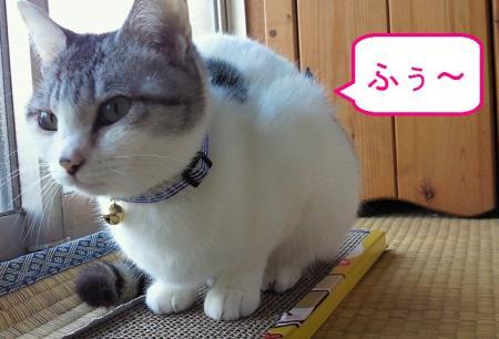 006_convert_20110227114905.jpg