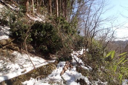 本日の核心、登山道にきこりの切り落とした枝の濃密ヤブ漕ぎ