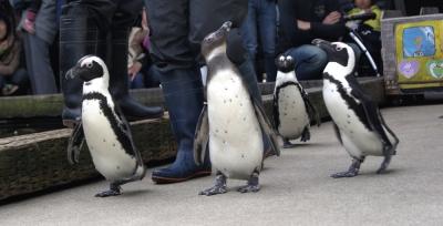 ペンギンパレードがお迎え