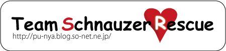 Team20Schnauzer.jpg
