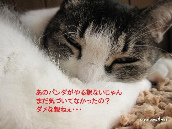 003_20110806185922.jpg