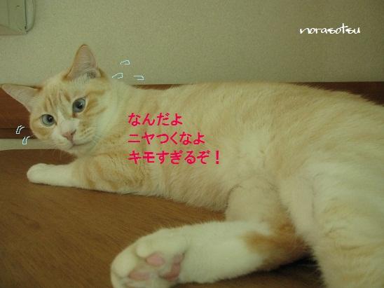 003_20110807100240.jpg