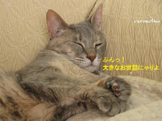 004_20110828122707.jpg