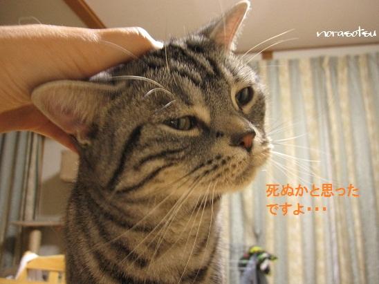 009_20110828122706.jpg