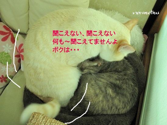 031_20110910103457.jpg