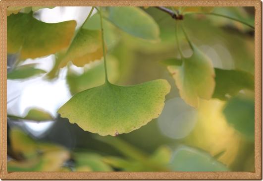 2011 八幡宮 菊祭り 017