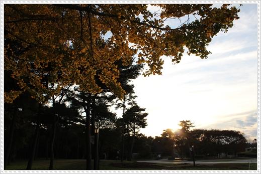 2011 ひめちゃんの日常 056