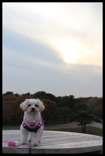 2011 海浜公園散歩 020