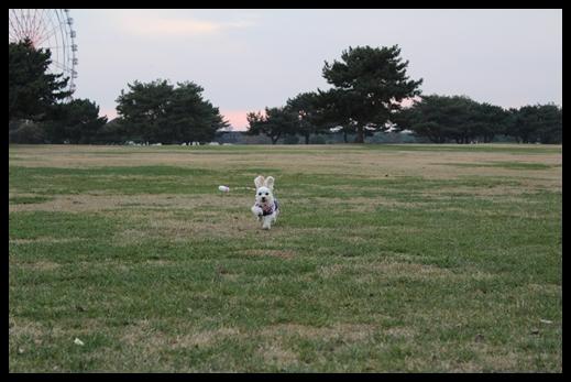 2011 海浜公園散歩 047