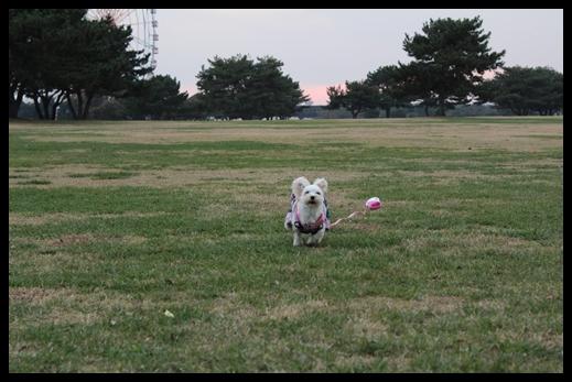 2011 海浜公園散歩 049