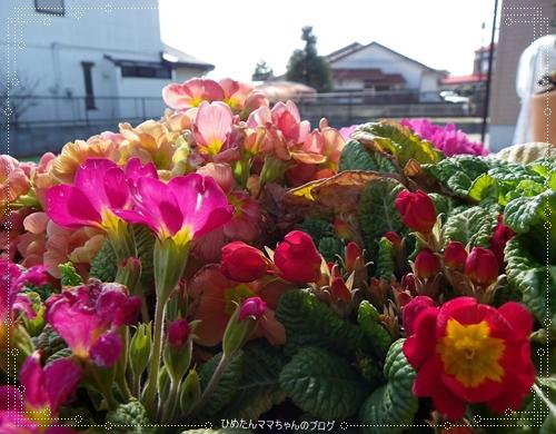 2012 堀川庭園 027