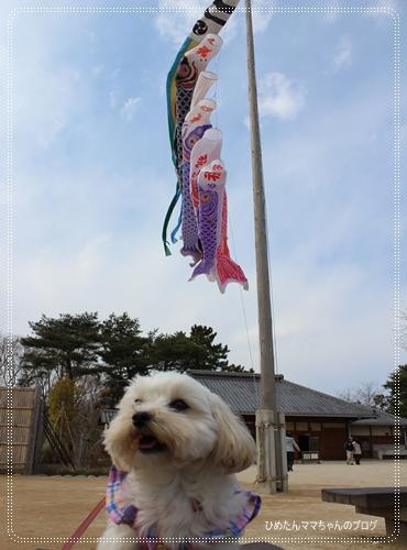 2012 ひめちゃんの日常 054
