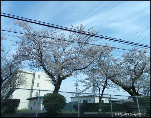 2012 ひめちゃんの日常 035