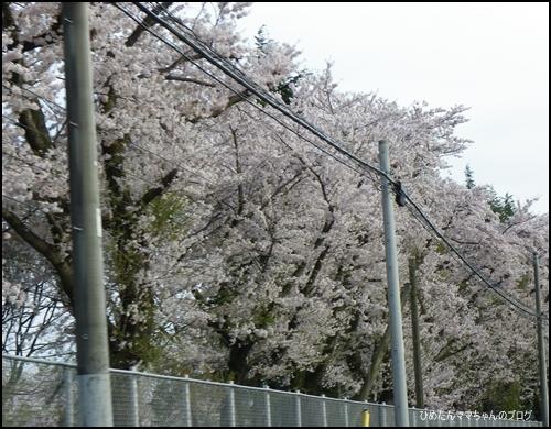 2012 ひめちゃんの日常 032