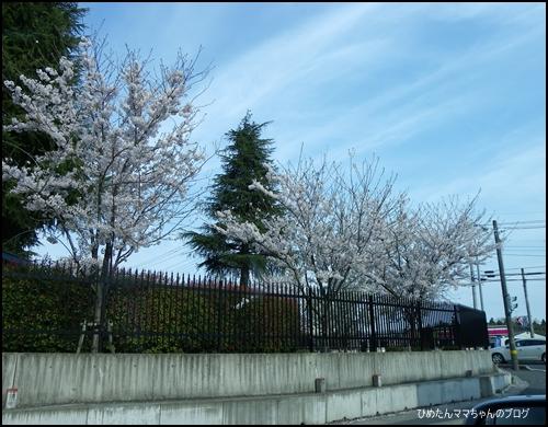 2012 ひめちゃんの日常 037