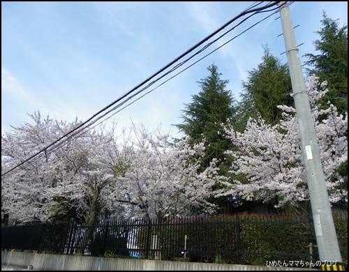 2012 ひめちゃんの日常 036