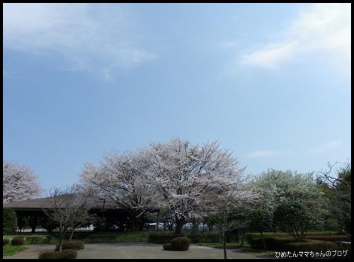 2012 ひめちゃんの日常 067