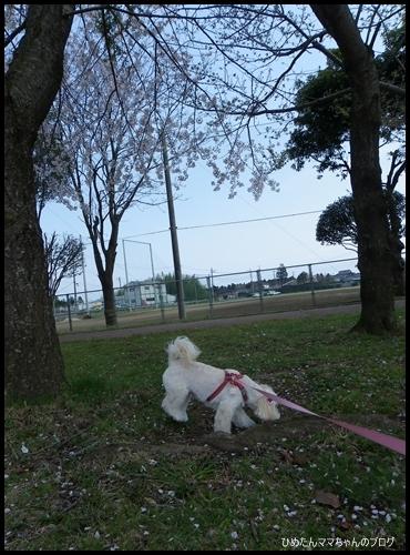2012 ひめちゃんの日常 064