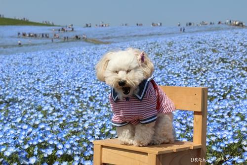 2012 海浜公園 037