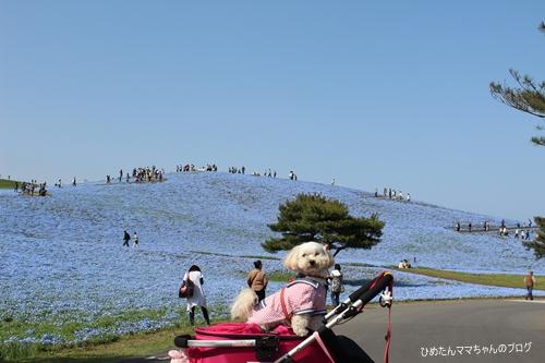 2012 海浜公園 072