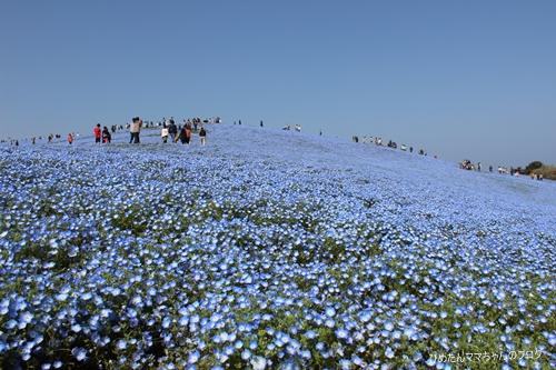 2012 海浜公園 063