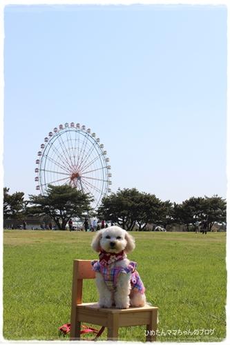 2012 ひめちゃんの日常 158