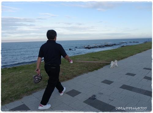 2012 ひめちゃんの日常 065
