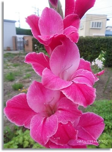 2012 堀川庭園 193