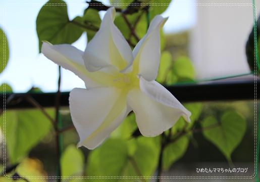 2012 堀川庭園 253