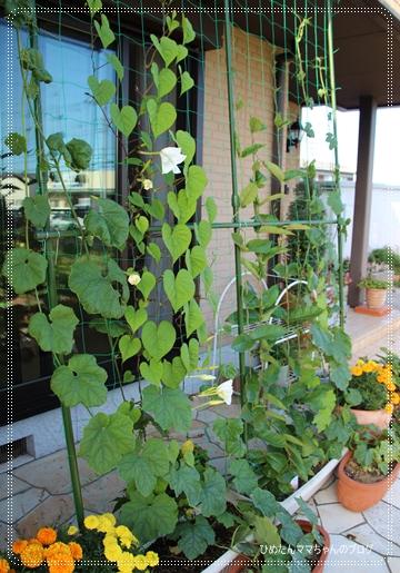 2012 堀川庭園 256