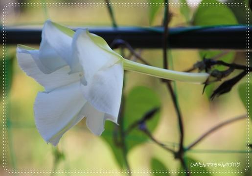 2012 堀川庭園 254