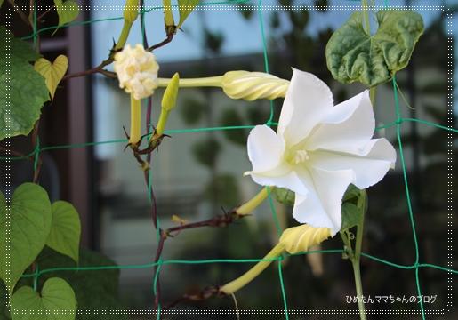 2012 堀川庭園 255