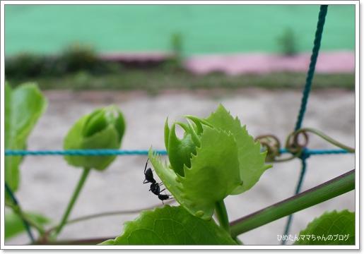 2012 堀川庭園 265