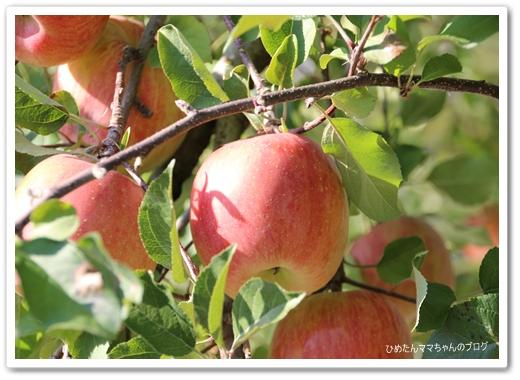 りんご~♪