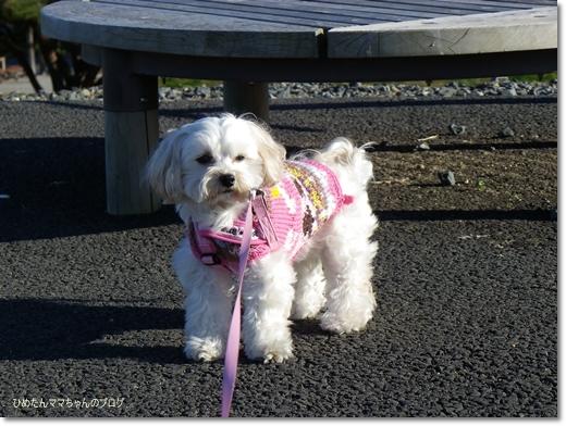 2012 海浜公園散歩 008