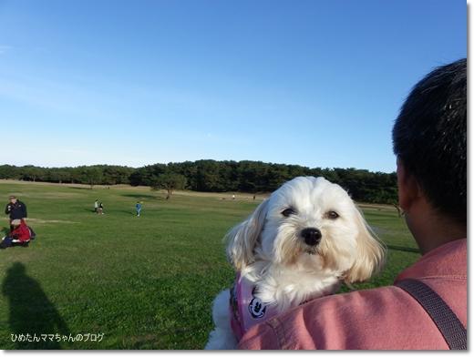 2012 大きな公園散歩