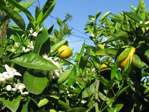オレンジライム2
