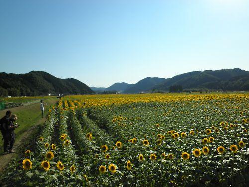 20110717Hattoji041s