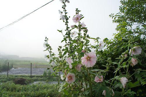 20120704HokusetsuS006s