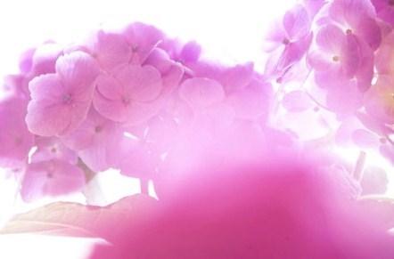 20100615_noririn.jpg