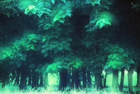 20110603_noriirn.jpg